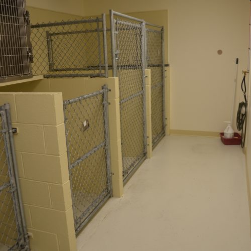 Dog Kennel Room